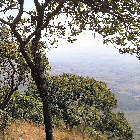 Looking out from the Miombo Forest